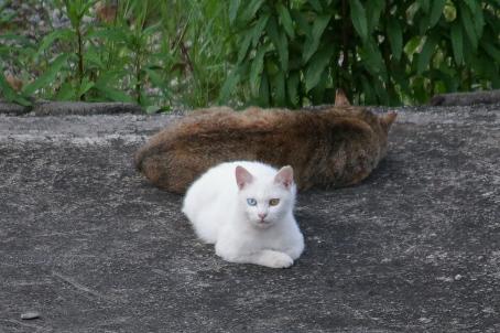白猫の写真