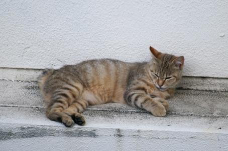 トラ猫の写真