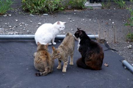 野良猫一家の写真