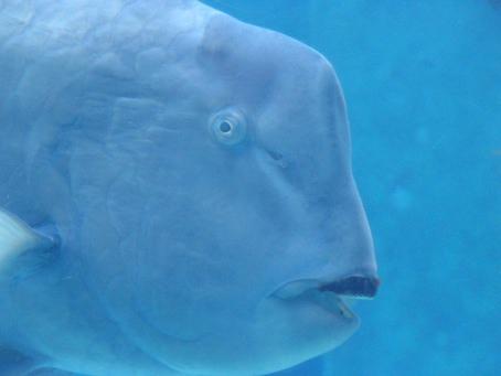 美ら海水族館の魚写真