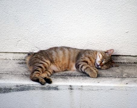 臨時休業のお知らせ 猫休み