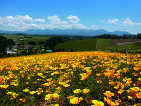 四季彩の丘の写真
