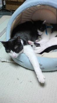 猫ぎゅうぎゅう